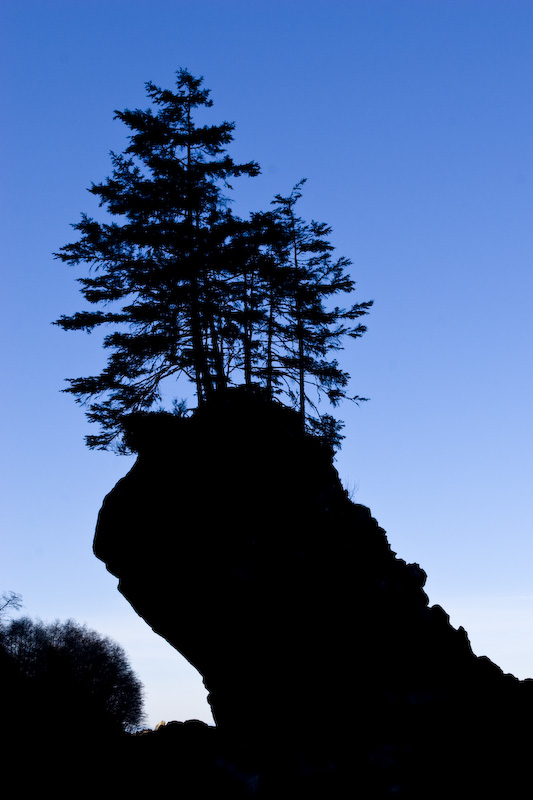 Silhouette Of Tree Growing Atop Seastack