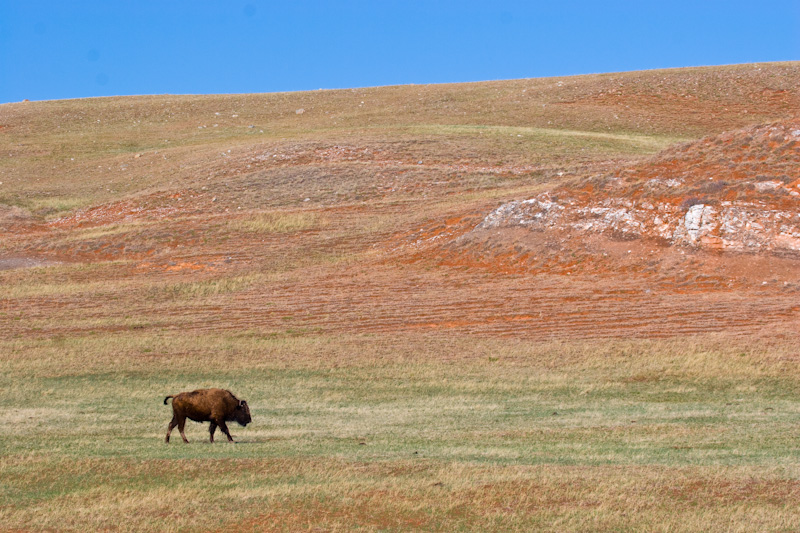 Bison And Redbeds