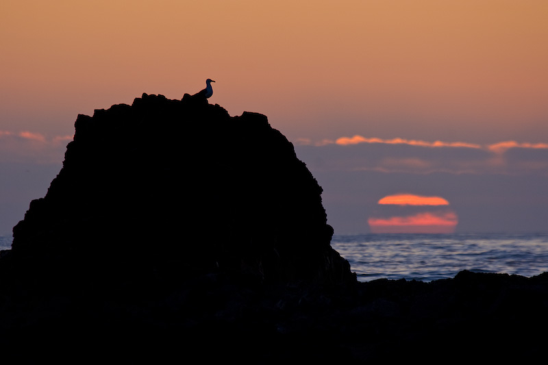 Sun Going Down Behind Gull Silhouetted On Seastack