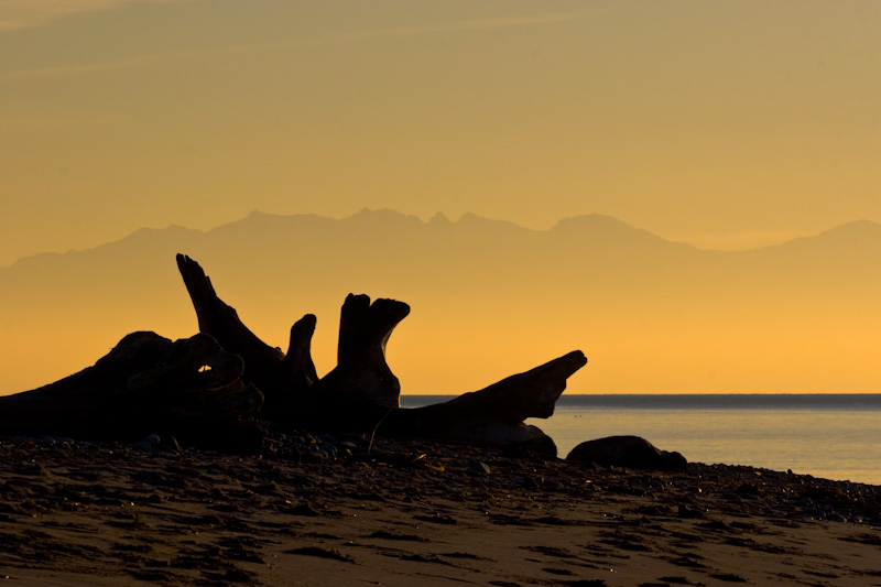 Driftwood On Beach WIth Olympic Mountains In The Distance
