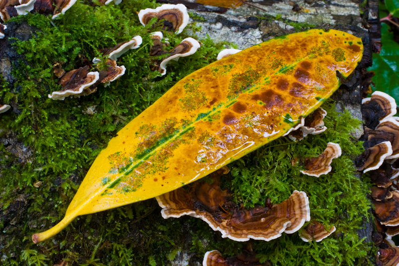 Fallen Leaf And Turkey-Tail Fungus
