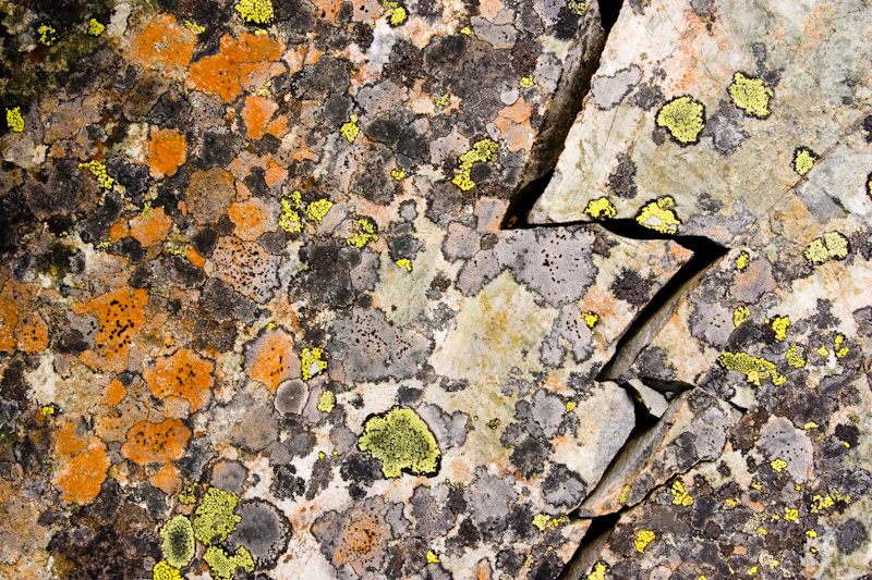 Lichen On Split Rock