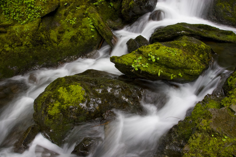 Moss Covered Rocks In Stream