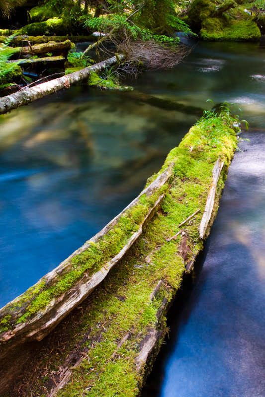 Moss Covered Log In Clearwater River