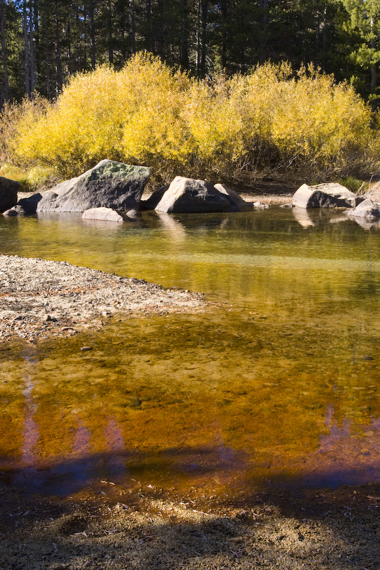 Fall Colors Reflected In The Tuolumne River