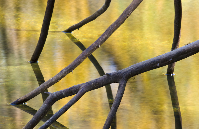 Branches And Fall Color Reflected In The Merced River