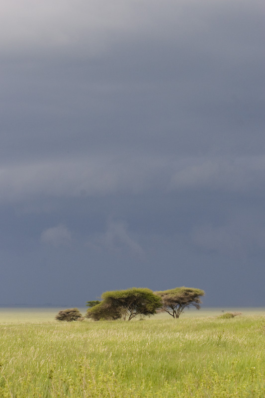 Storm Clouds Above The Serengeti