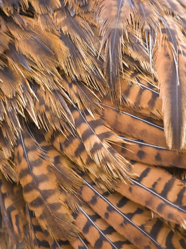 Weka Feather Detail