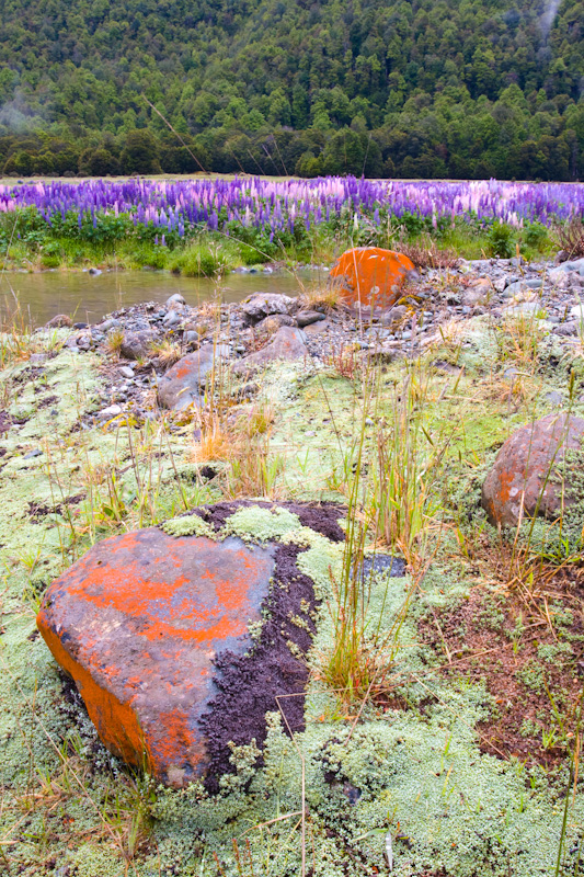 Lichen Covered Rocks On Banks Of Eglinton River