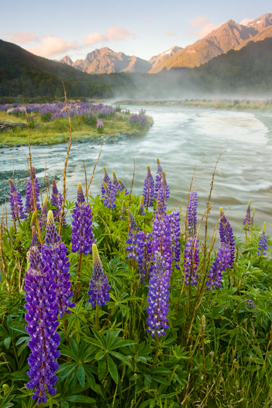 Lupines And Morning Mist Over The Eglinton River At Sunrise