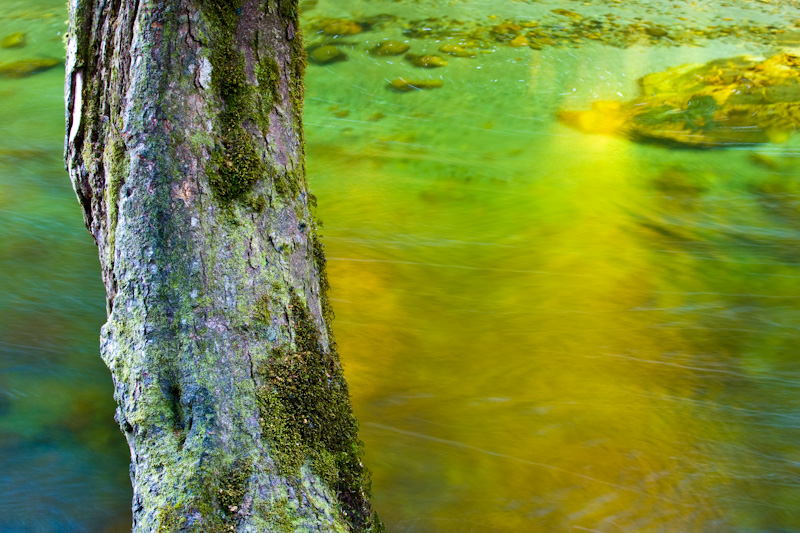 Tree Trunk And Clinton River