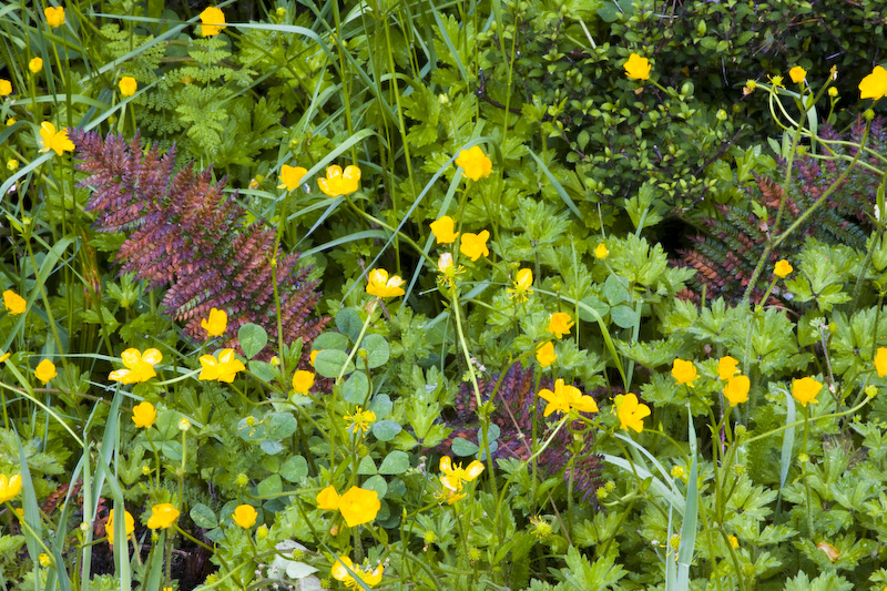 Wildflowers And Fallen Fern Leaf