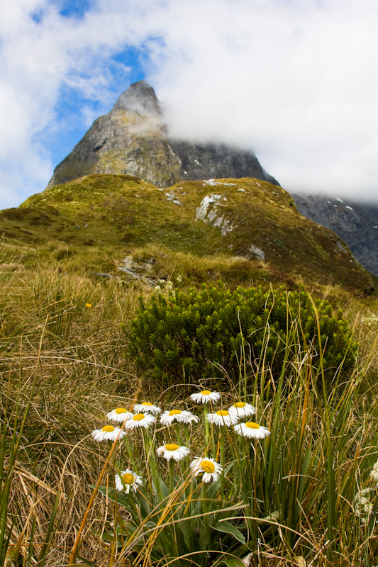 Mount Ballon And Wildflowers