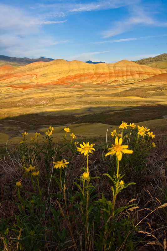 Wildflowers And The Painted Hills