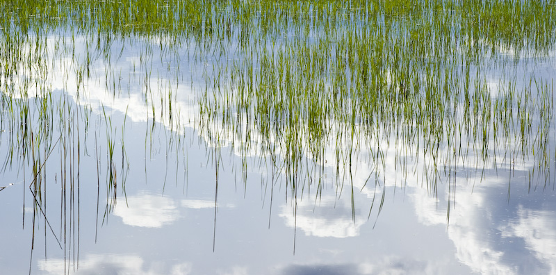 Clouds Reflected In Wetland