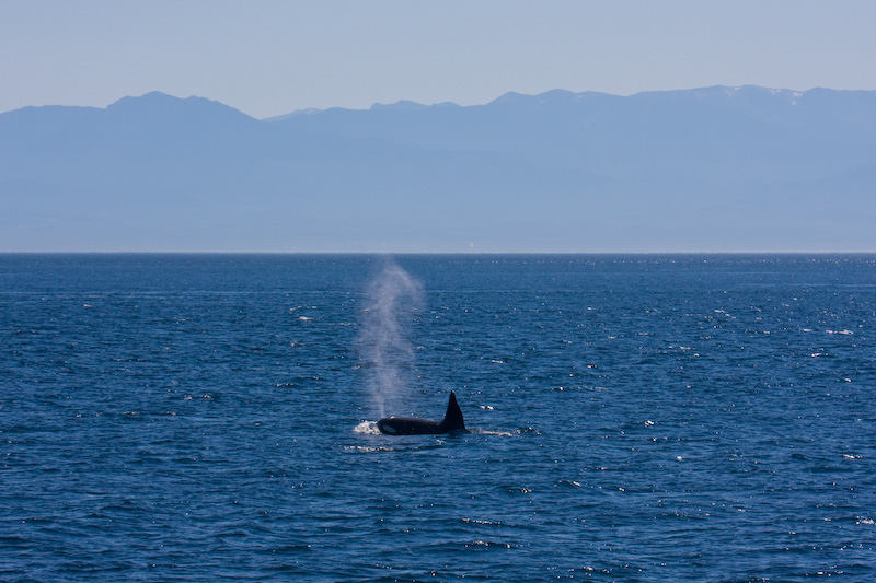 Orca And Olympic Mountains
