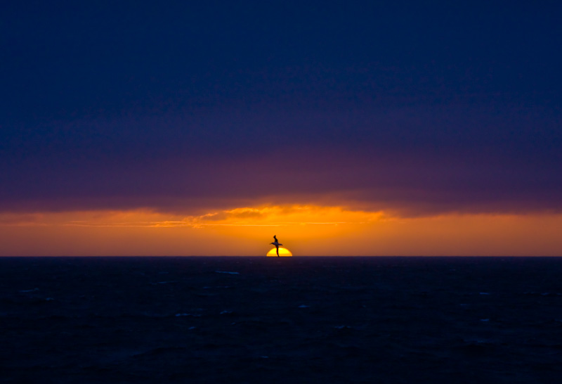 Sunset Behind Wandering Albatross