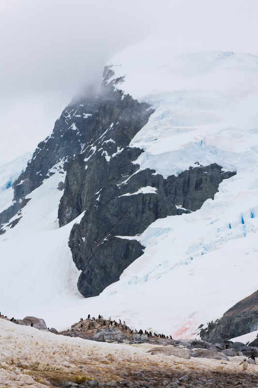Moutain Above Gentoo Penguin Colony