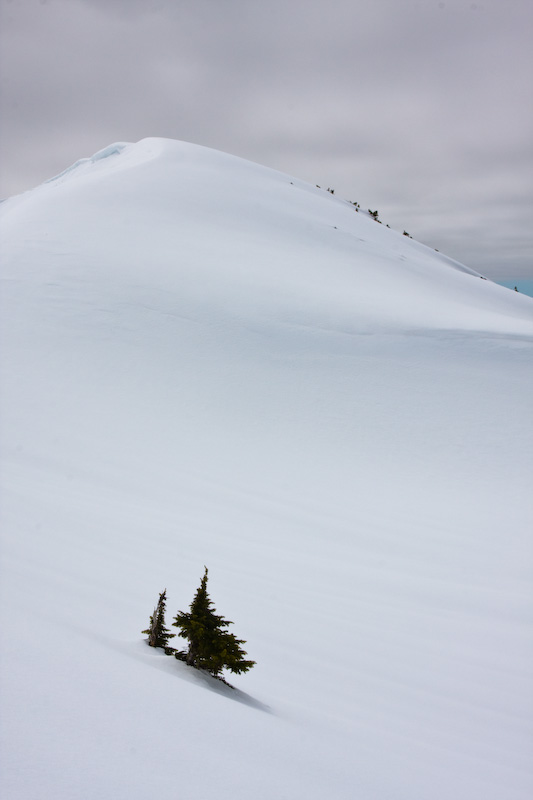 Tree Tops Emerging From Snow Slope