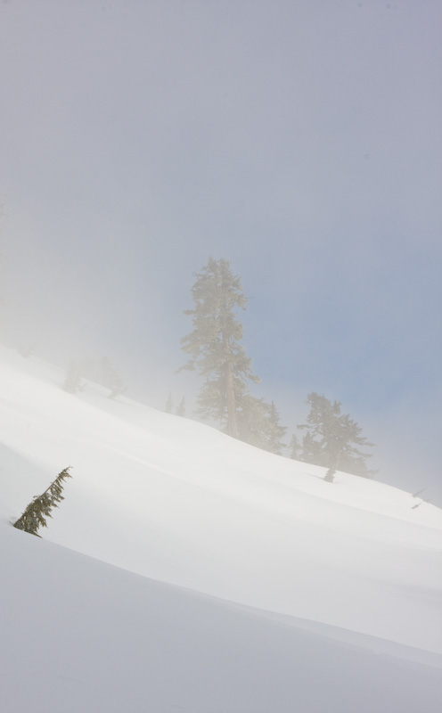 Trees Emerging From Snowslope