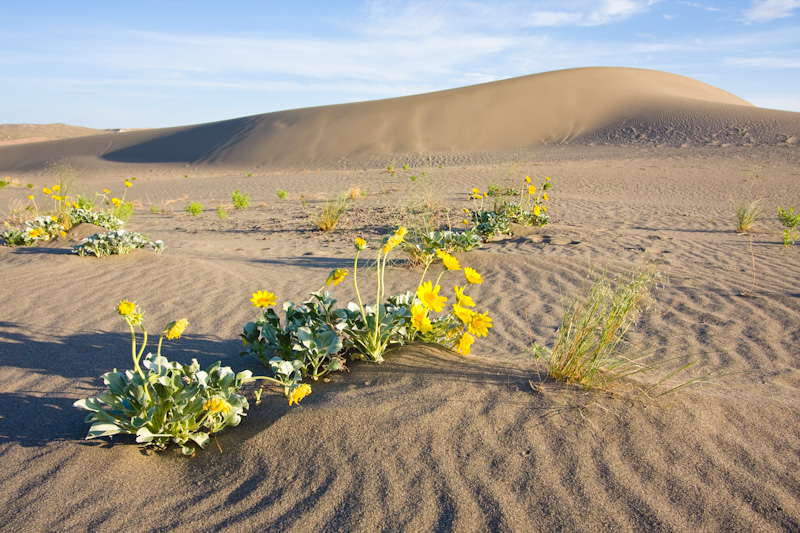 Flowers And Dune