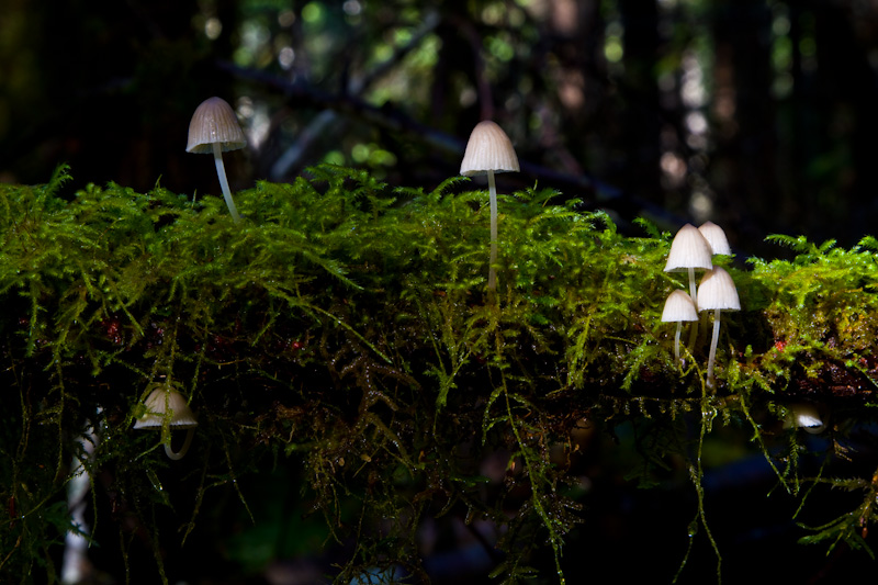 Mushrooms On Moss Covered Branch