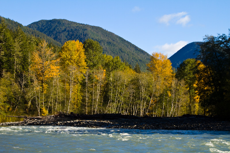 Fall Color Along The Elwha River