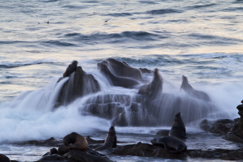 Waves Breaking Over Rocks And California Sea Lions