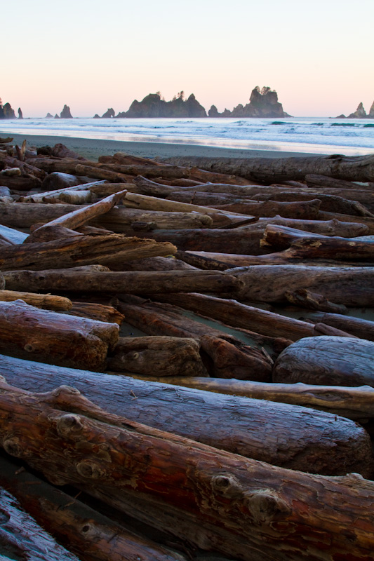 Driftwood On Shi Shi Beach