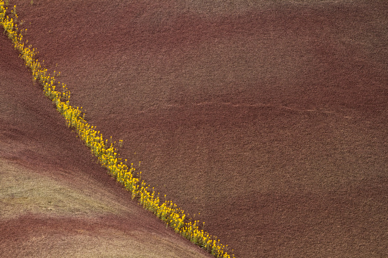 Flowers And Badlands