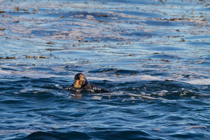 Sea Otters Playing