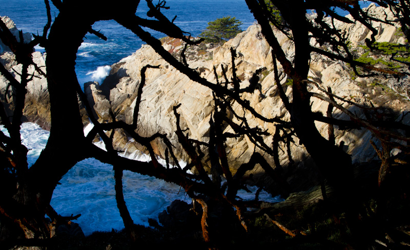 Cypress Cove Through Monterey Cypress Branches