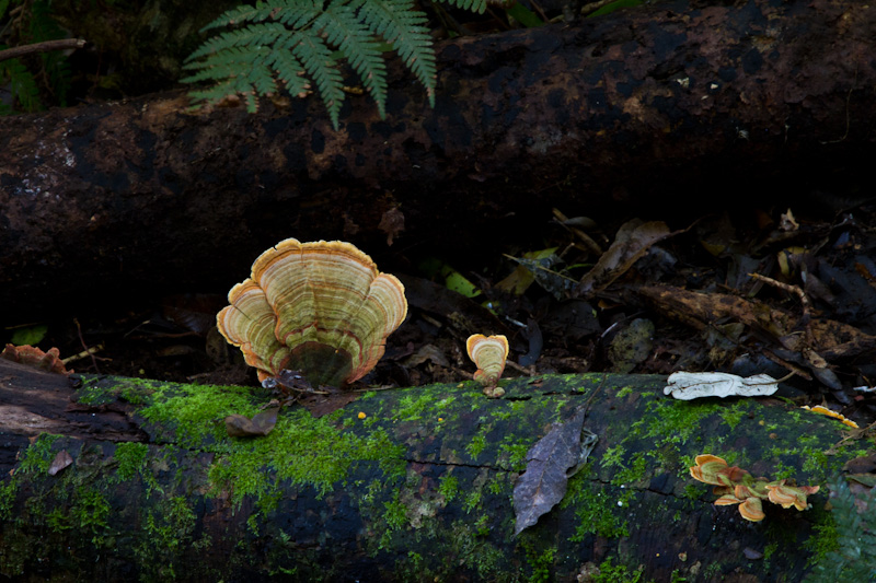 Bracket Fungus On Log
