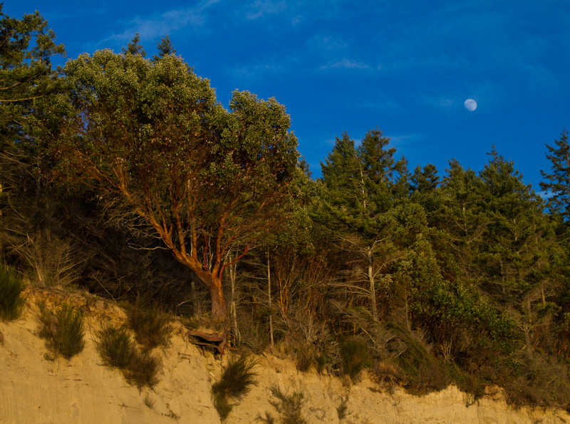 Moon Above Foulweather Bluff