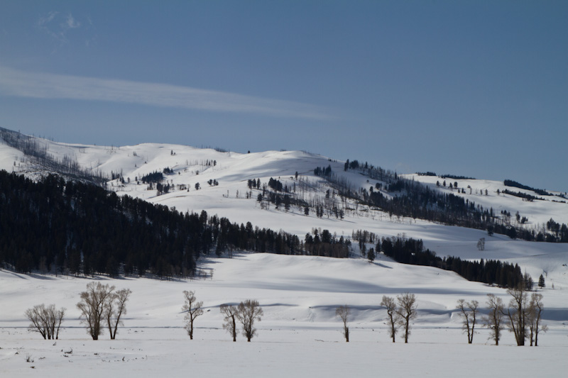 Lamar River Valley In Winter