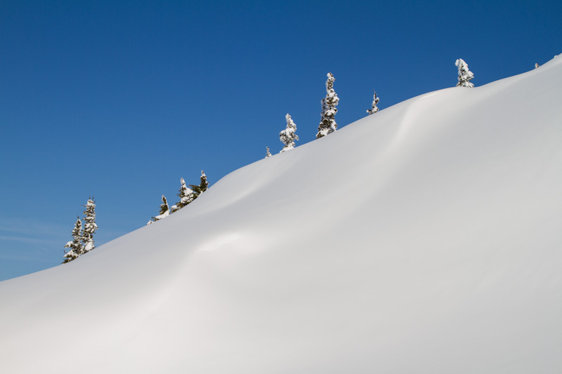 Trees On Snow Covered Ridge