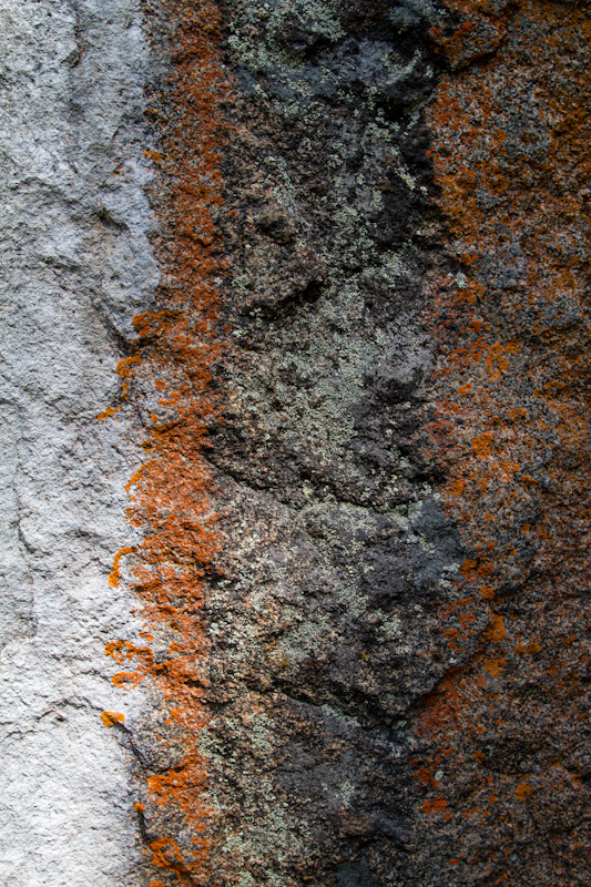 Lichen On Rock Face