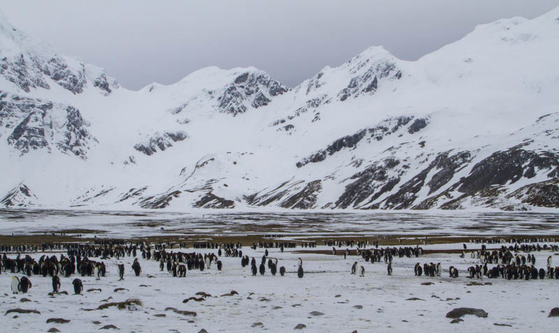 Peaks Above King Penguins