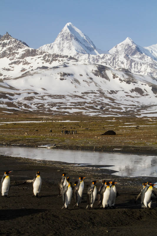 Peaks And King Penguins