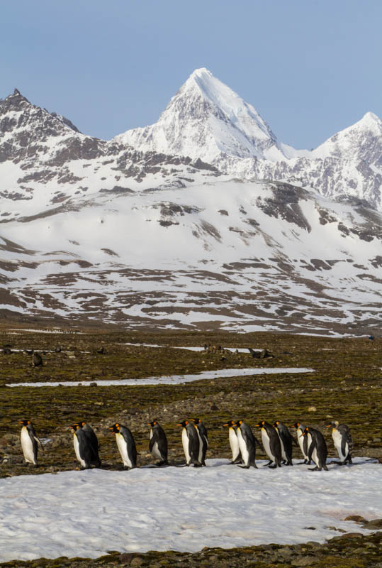 King Penguins And Peaks