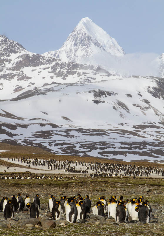 King Penguins And Peak