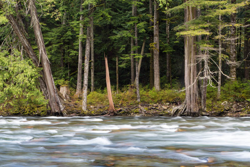 Trees Along Bank Of Snoqualmie River