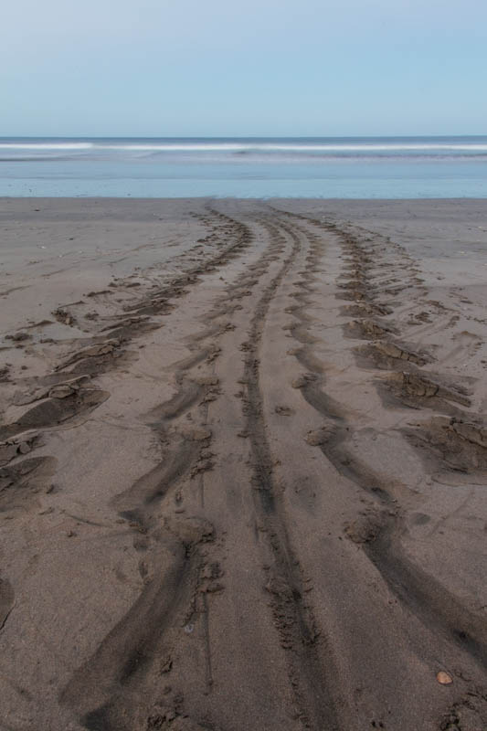 Leatherback Tracks In Sand