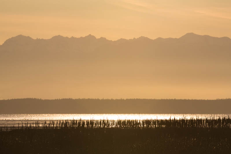 Wetlands and Olympic Mountains At Sunset