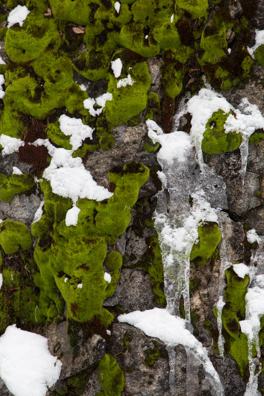 Moss And Ice On Rock Face