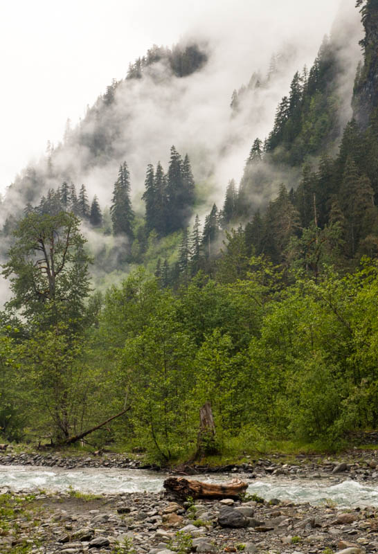 Mist Above The Quinalt River
