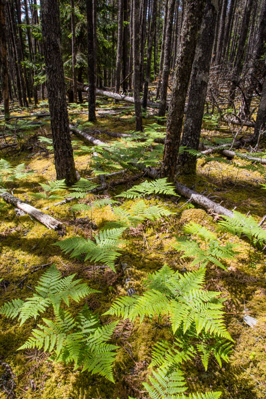 Ferns On Forest Floor