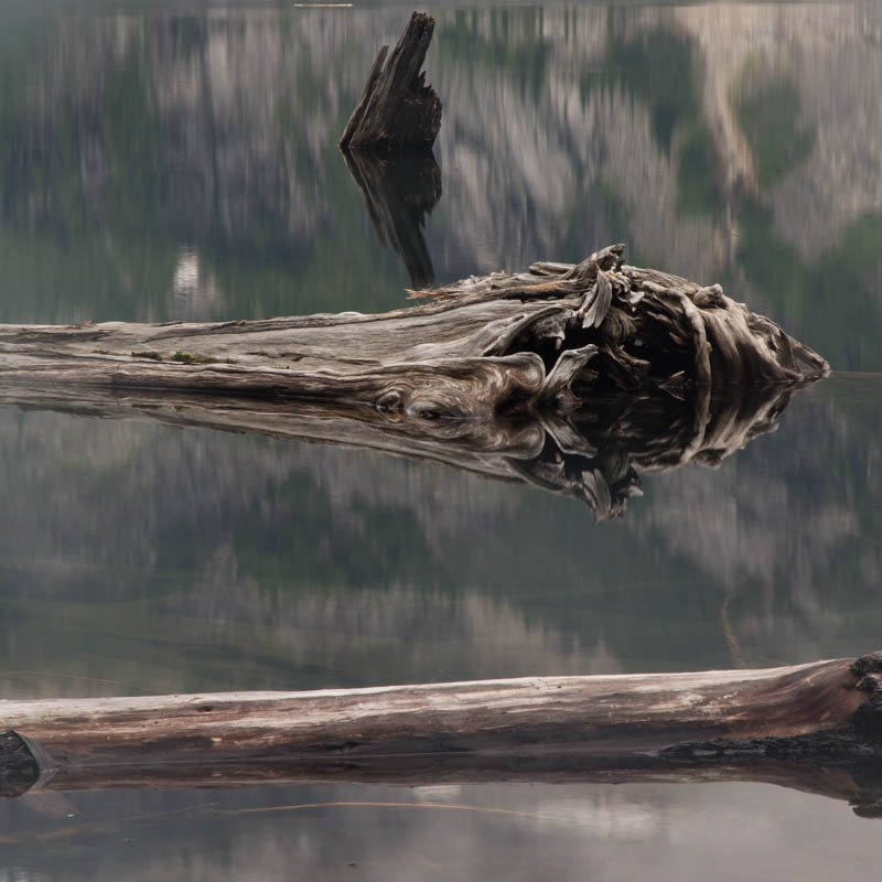 Driftwood In Copper Lake