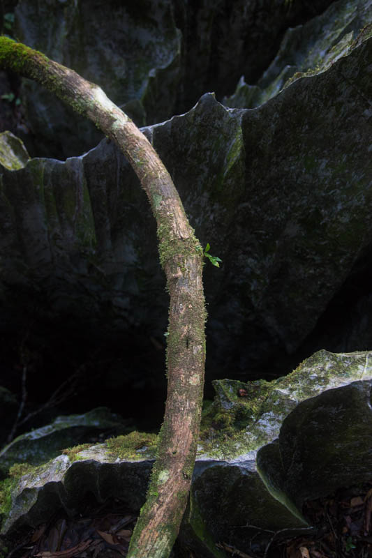 Karst Formations And Liana