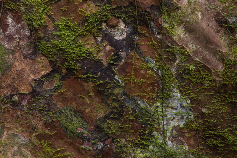 Lichen And Moss On Bark